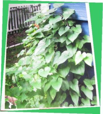 WV Weeds workshop vine on bathroom wall better